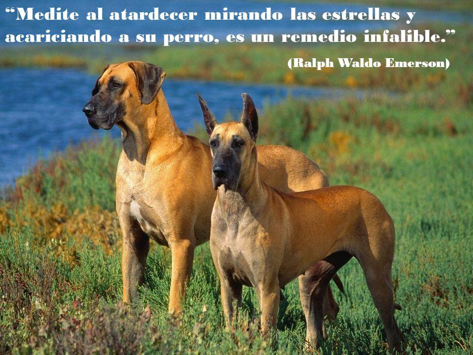 Puedes decir cualquier tontería a un perro y el perro te mirará de una manera que parece decir: Por Dios, ¡¡tiene razón!! Nunca se me hubiera ocurrido