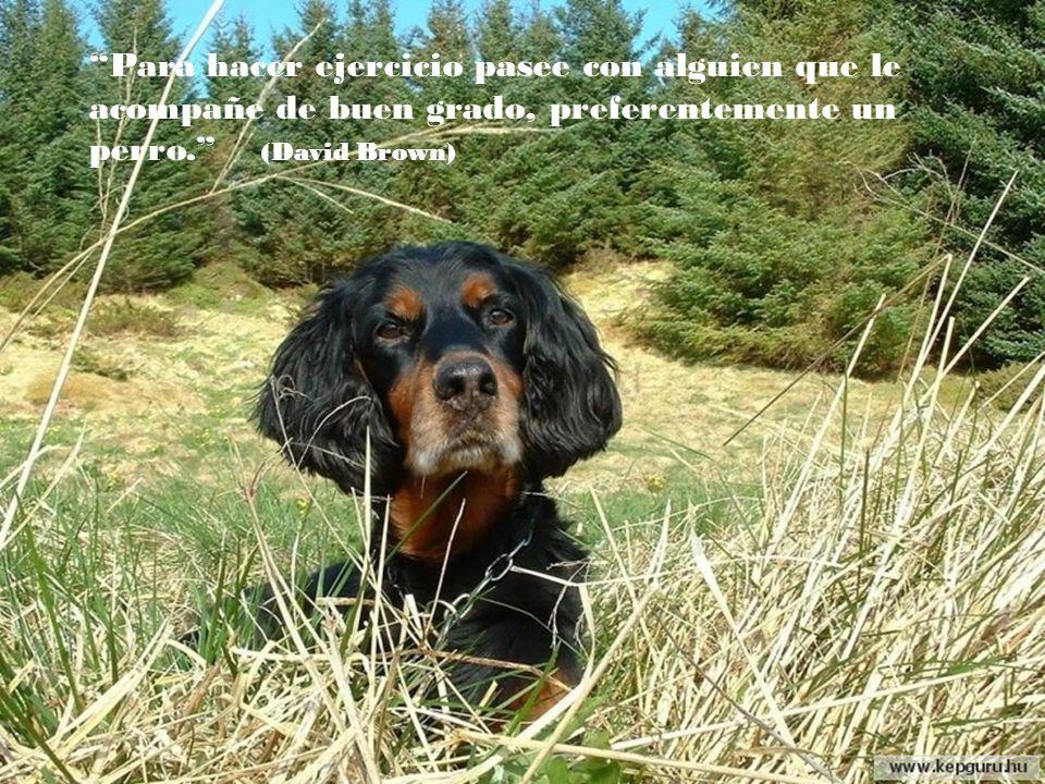 Medite al atardecer mirando las estrellas y acariciando a su perro, es un remedio infalible. (Ralph Waldo Emerson)