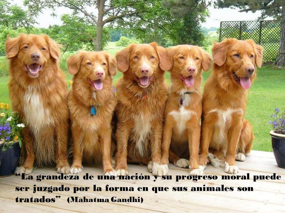 En algún lugar bajo la lluvia, siempre habrá un perro abandonado que te impedirá ser feliz ( Aldous Huxley )