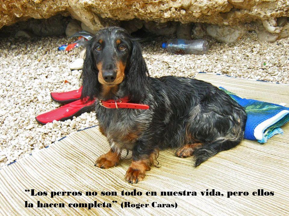 Muchos que han dedicado toda su vida al amor, pueden contarnos menos sobre este tema, que un niño que perdió ayer a su perro ( Thornton Wilder )