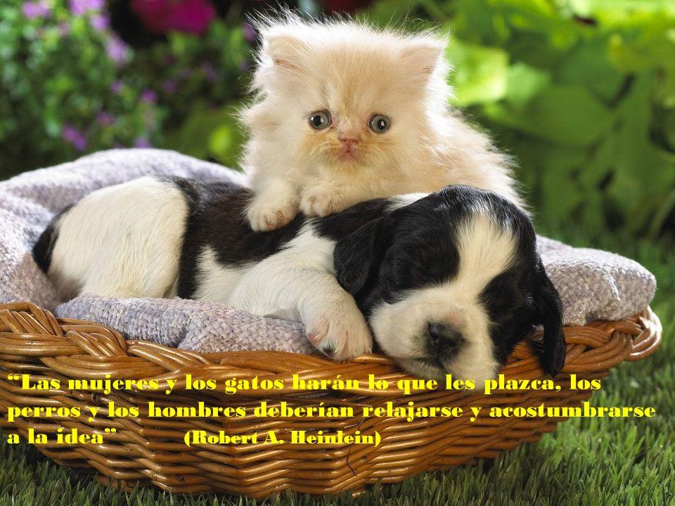 Una vida sin perro es un error (Carl Zuckmayer)