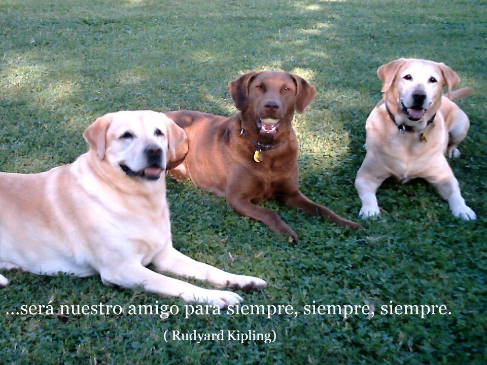 De solo pensar que mi perro me quiere más que yo a él, siento vergüenza. (Konrad Lorenz)