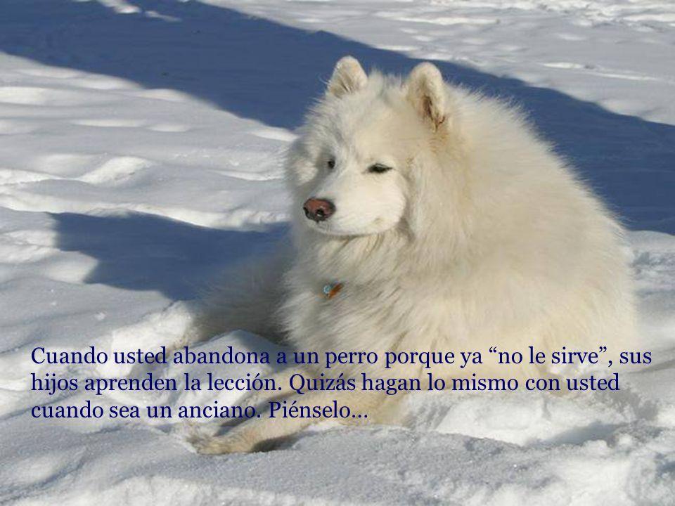 El amor por los animales, eleva el nivel cultural del pueblo. (F. Salvochea)