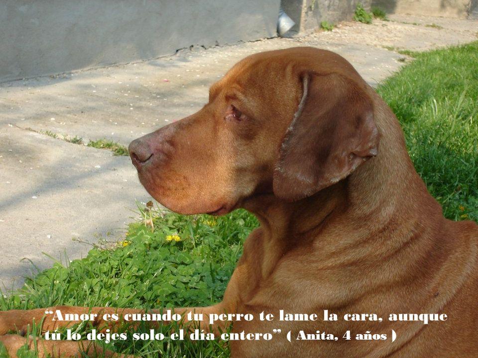 El perro ha hecho del hombre su dios, si el perro fuera ateo sería perfecto ( Paul Valery)