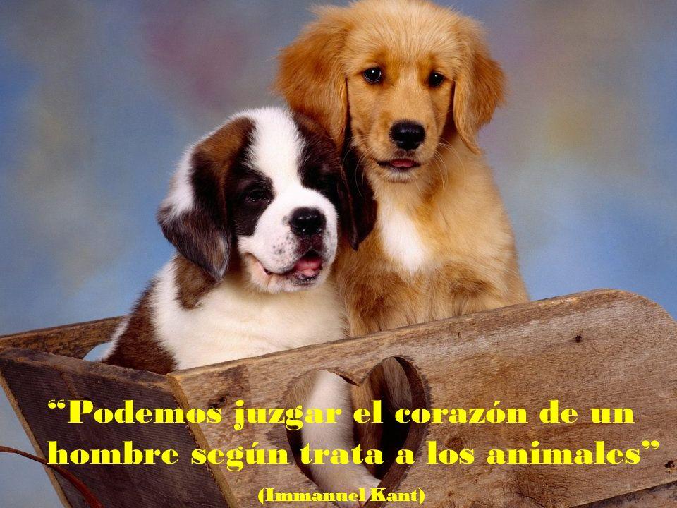 No me importa saber si un animal puede razonar. Solo se que es capaz de sufrir y por ello lo considero mi prójimo (Albert Schweitzer)