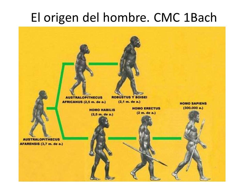 El origen del hombre. CMC 1Bach