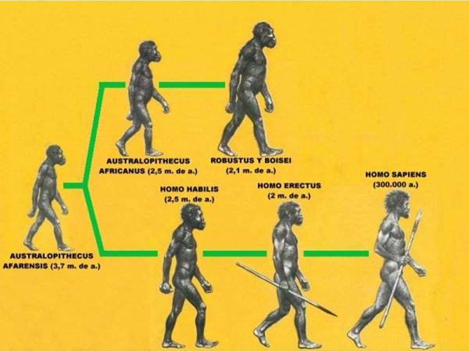 10 ma, Antecesores de Antropomorfos asiáticos (orangután, gibón) 7 ma, Antepasados de antropomorfos africanos (chimpancé, gorila) 6,5 ma, final Plioceno.