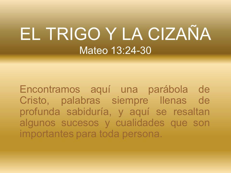 EL TRIGO Y LA CIZAÑA Mateo 13:24-30 Encontramos aquí una parábola de Cristo, palabras siempre llenas de profunda sabiduría, y aquí se resaltan algunos