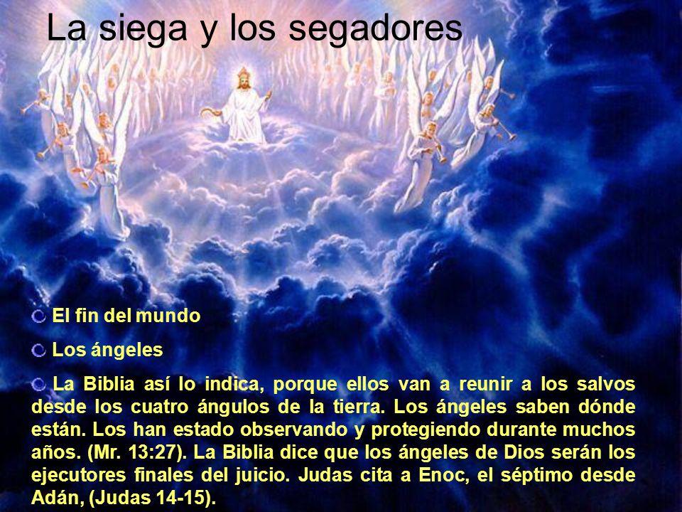 La siega y los segadores El fin del mundo Los ángeles La Biblia así lo indica, porque ellos van a reunir a los salvos desde los cuatro ángulos de la t