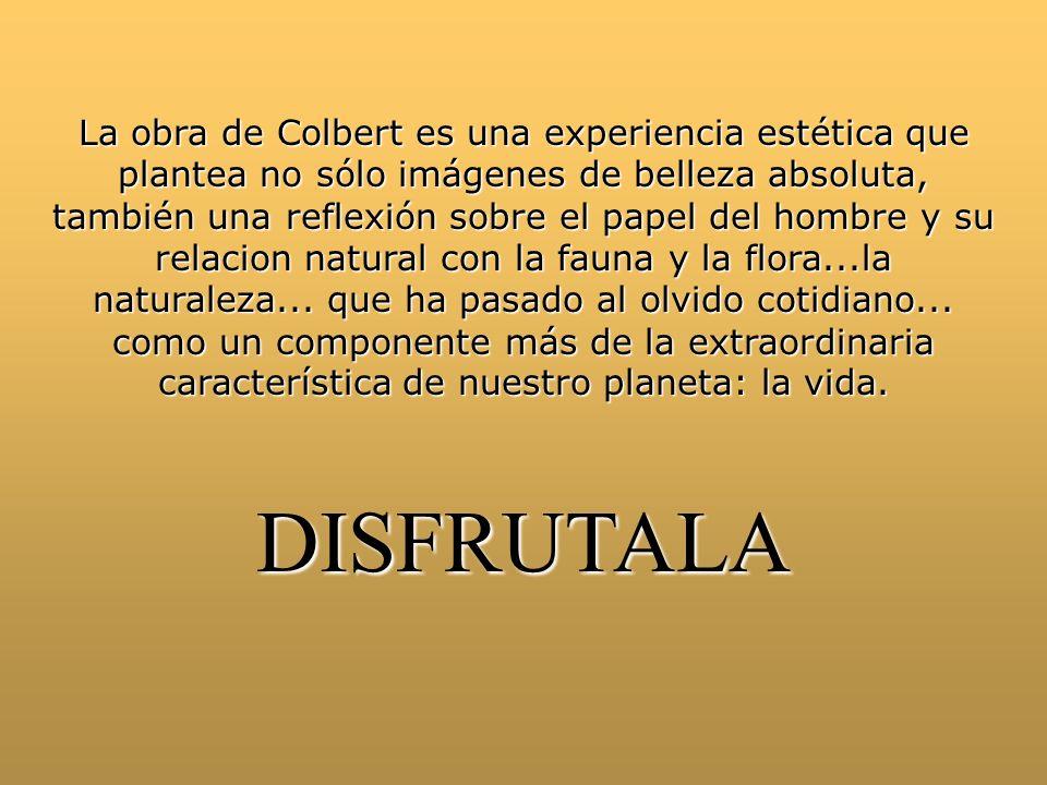 La obra de Colbert es una experiencia estética que plantea no sólo imágenes de belleza absoluta, también una reflexión sobre el papel del hombre y su relacion natural con la fauna y la flora...la naturaleza...