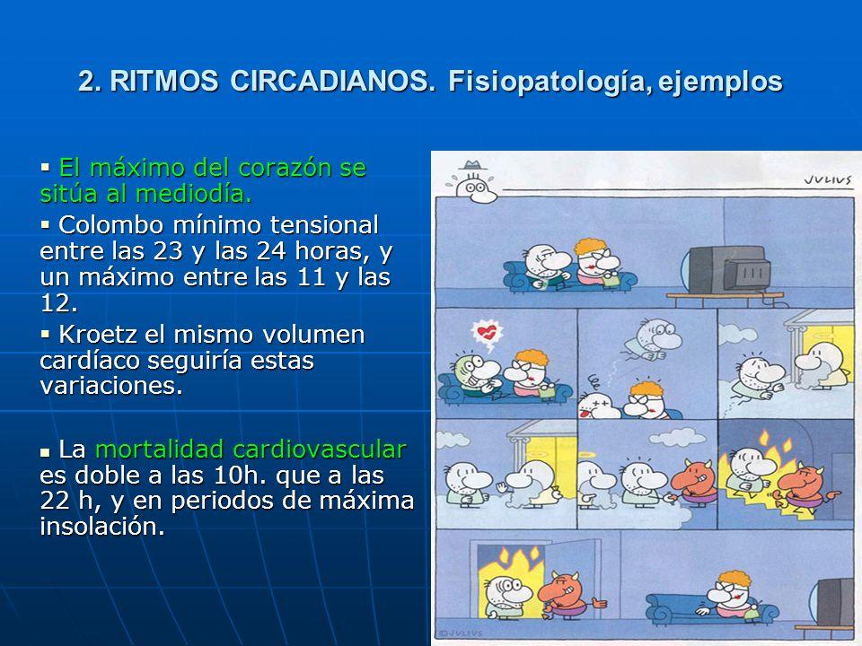 25 2.RITMOS CIRCADIANOS. Fisiopatología, ejemplos El máximo del corazón se sitúa al mediodía.