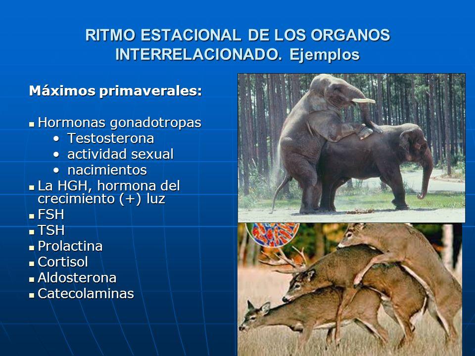 70 RITMO ESTACIONAL DE LOS ORGANOS INTERRELACIONADO.
