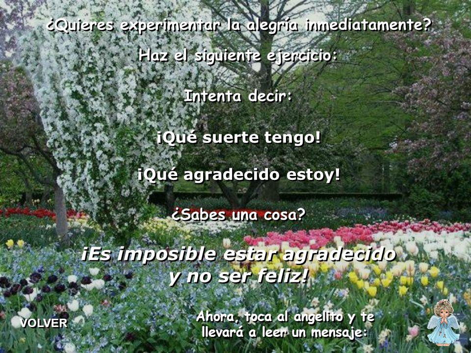 La alegría no significa euforia. La alegría no significa euforia. La alegría es siempre una consecuencia, no es posible buscarla. La alegría es siempr