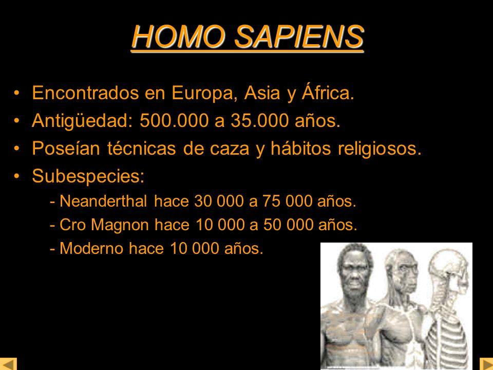 HOMO SAPIENS Encontrados en Europa, Asia y África. Antigüedad: 500.000 a 35.000 años. Poseían técnicas de caza y hábitos religiosos. Subespecies: - Ne