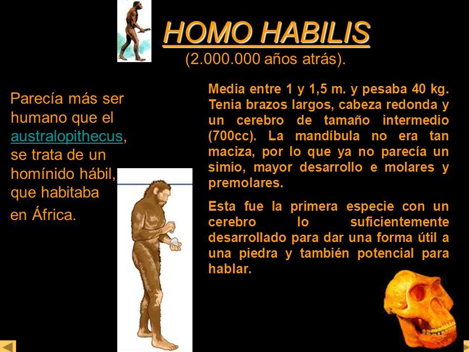 HOMO HABILIS HOMO HABILIS (2.000.000 años atrás). Parecía más ser humano que el australopithecus, se trata de un homínido hábil, que habitaba australo