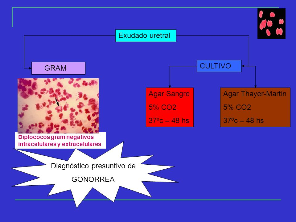 Exudado uretral GRAM CULTIVO Agar Sangre 5% CO2 37ºc – 48 hs Agar Thayer-Martin 5% CO2 37ºc – 48 hs Diplococos gram negativos intracelulares y extracelulares Diagnóstico presuntivo de GONORREA