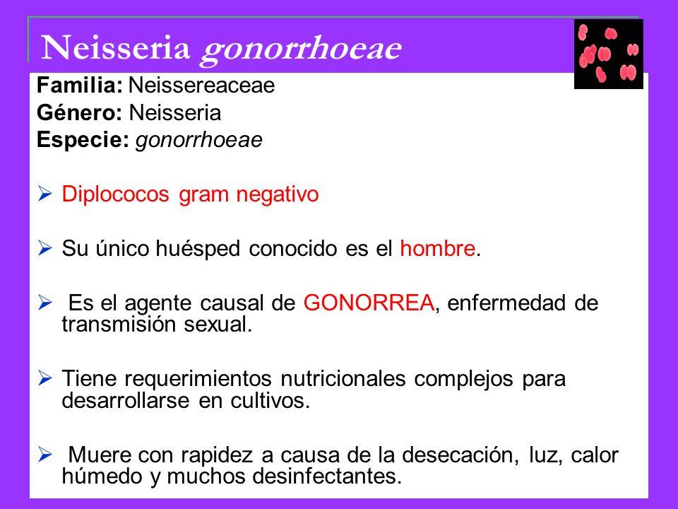 Neisseria gonorrhoeae Familia: Neissereaceae Género: Neisseria Especie: gonorrhoeae Diplococos gram negativo Su único huésped conocido es el hombre.