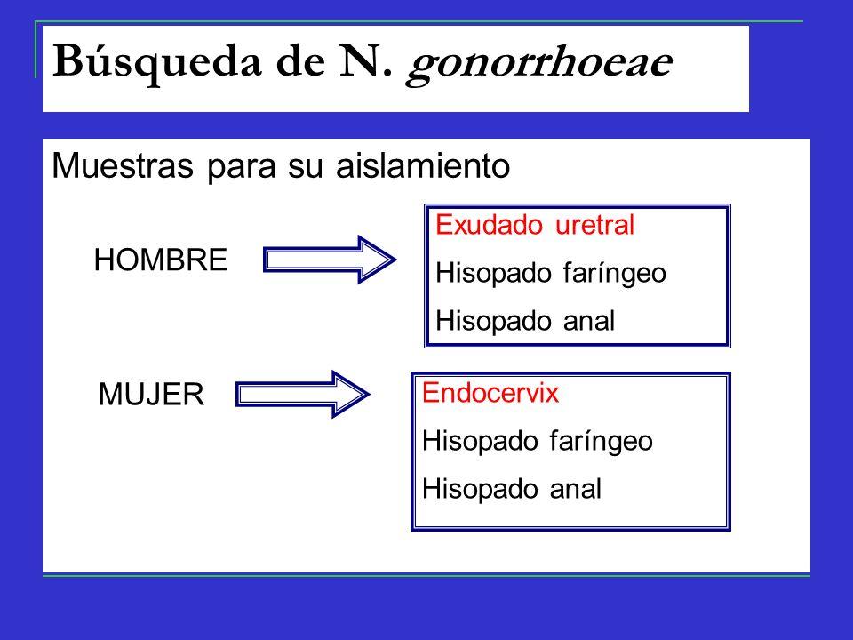 Muestras para su aislamiento Exudado uretral Hisopado faríngeo Hisopado anal Endocervix Hisopado faríngeo Hisopado anal HOMBRE MUJER Búsqueda de N.