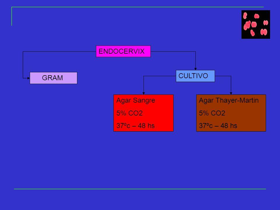 ENDOCERVIX GRAM CULTIVO Agar Sangre 5% CO2 37ºc – 48 hs Agar Thayer-Martin 5% CO2 37ºc – 48 hs