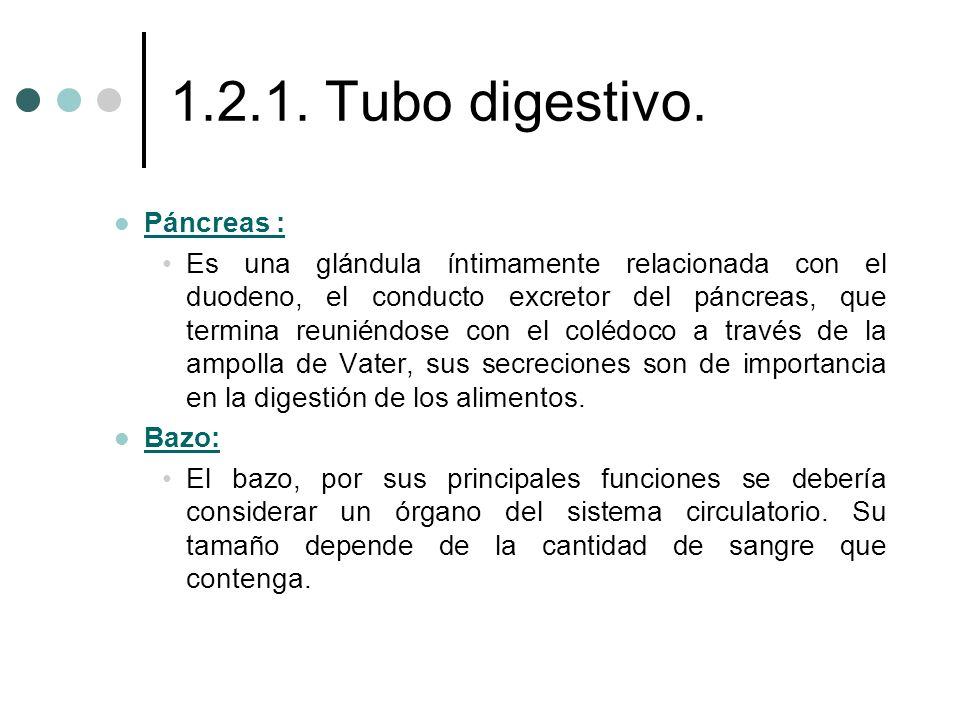 1.2.1. Tubo digestivo. Páncreas : Páncreas : Es una glándula íntimamente relacionada con el duodeno, el conducto excretor del páncreas, que termina re