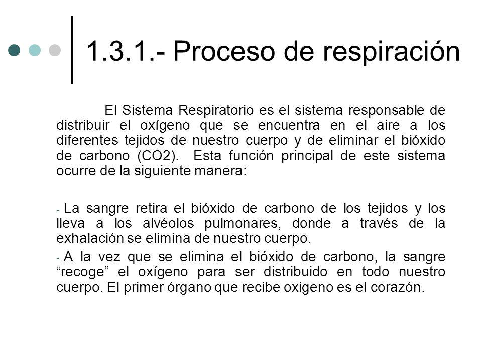1.3.1.- Proceso de respiración El Sistema Respiratorio es el sistema responsable de distribuir el oxígeno que se encuentra en el aire a los diferentes