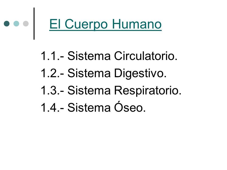 1.1.- Sistema Circulatorio. 1.2.- Sistema Digestivo. 1.3.- Sistema Respiratorio. 1.4.- Sistema Óseo.