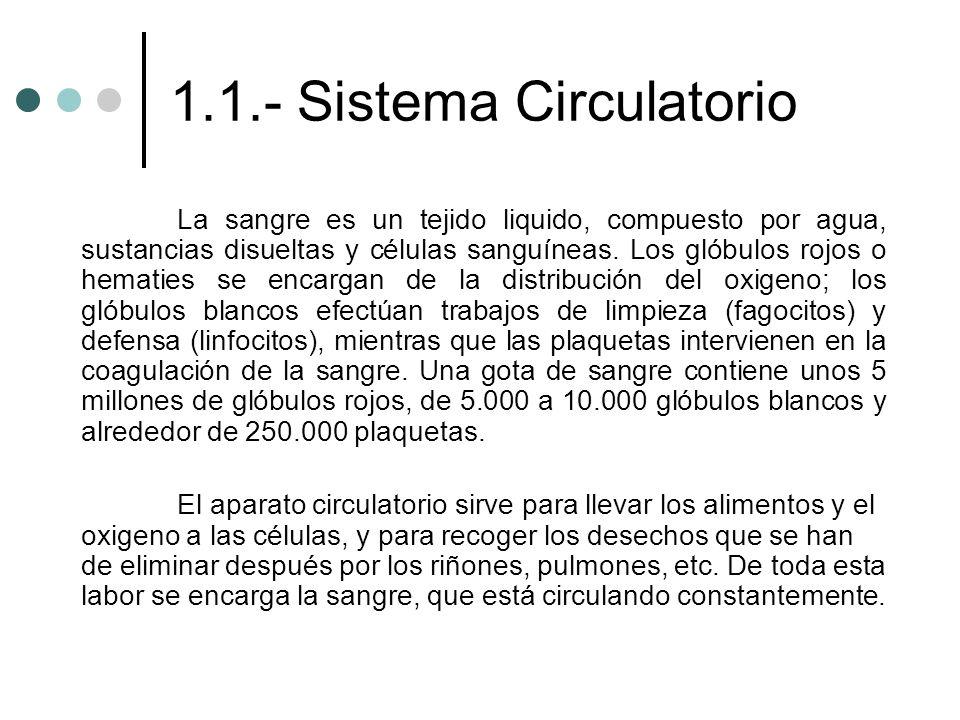 1.1.- Sistema Circulatorio La sangre es un tejido liquido, compuesto por agua, sustancias disueltas y células sanguíneas. Los glóbulos rojos o hematie