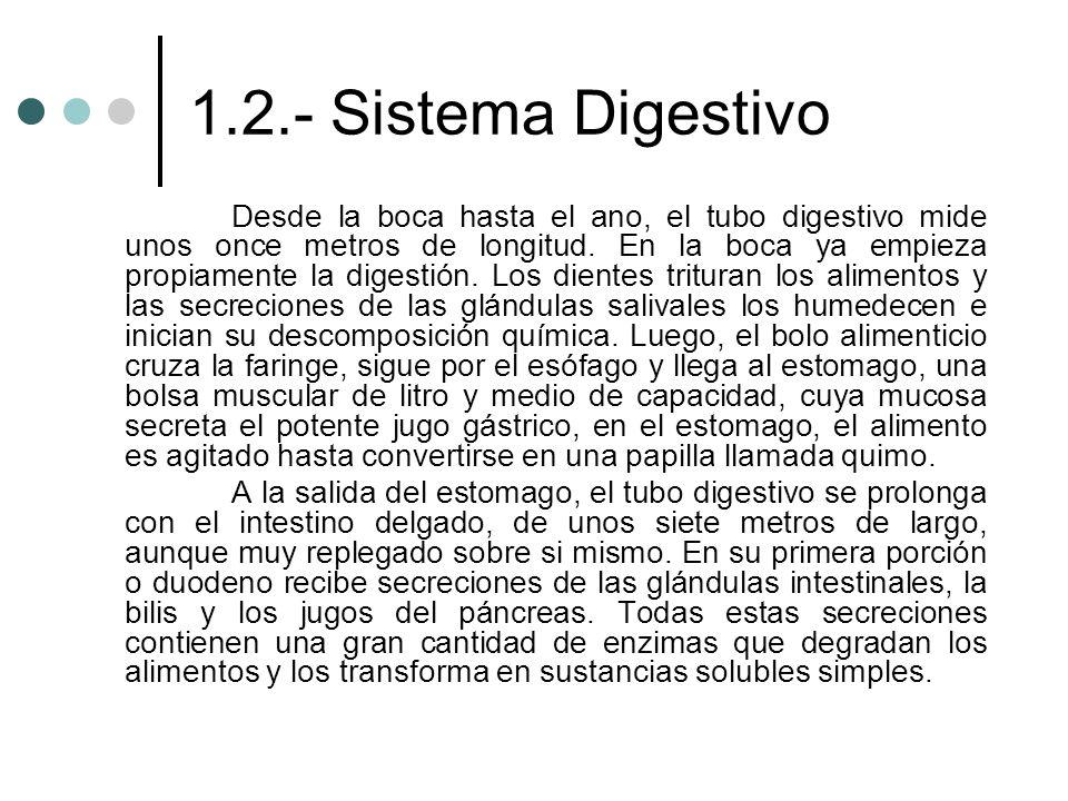 1.2.- Sistema Digestivo Desde la boca hasta el ano, el tubo digestivo mide unos once metros de longitud. En la boca ya empieza propiamente la digestió