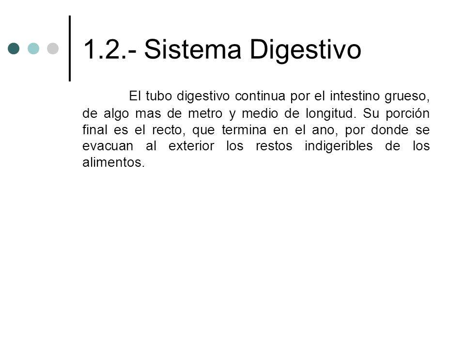 1.2.- Sistema Digestivo El tubo digestivo continua por el intestino grueso, de algo mas de metro y medio de longitud. Su porción final es el recto, qu
