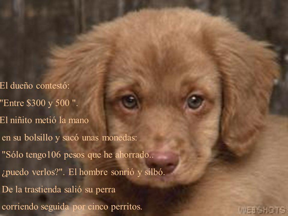 El dueño de una tienda colocó en el exterior un anuncio en la puerta que decía: Cachorritos en venta .
