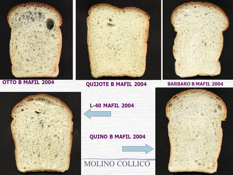 OTTO B MAFIL 2004 QUIJOTE B MAFIL 2004 BARBARO B MAFIL 2004 L-40 MAFIL 2004 QUINO B MAFIL 2004 MOLINO COLLICO
