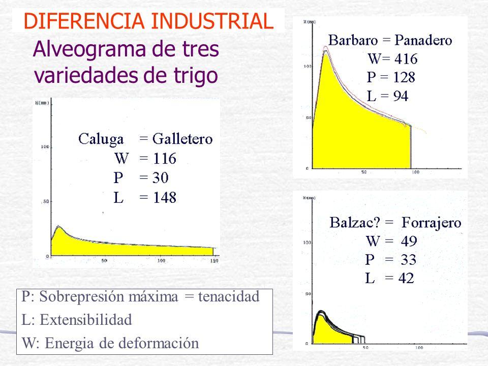 Alveograma de tres variedades de trigo P: Sobrepresión máxima = tenacidad L: Extensibilidad W: Energia de deformación DIFERENCIA INDUSTRIAL