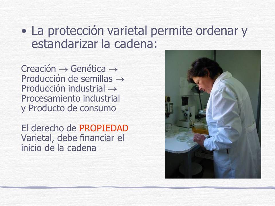 La protección varietal permite ordenar y estandarizar la cadena: Creación Genética Producción de semillas Producción industrial Procesamiento industrial y Producto de consumo El derecho de PROPIEDAD Varietal, debe financiar el inicio de la cadena