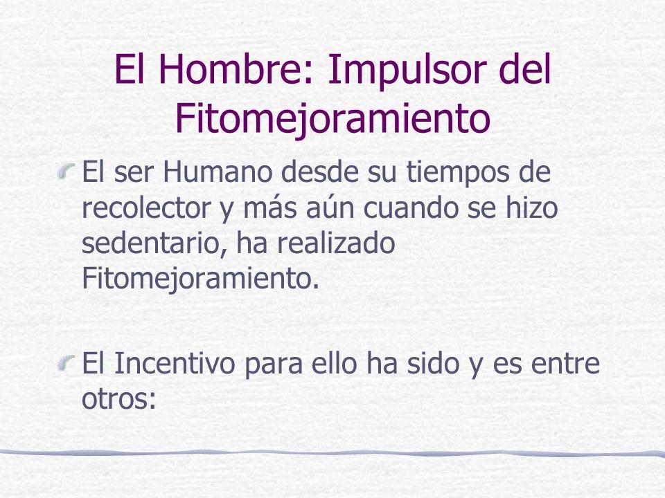 El Hombre: Impulsor del Fitomejoramiento El ser Humano desde su tiempos de recolector y más aún cuando se hizo sedentario, ha realizado Fitomejoramiento.
