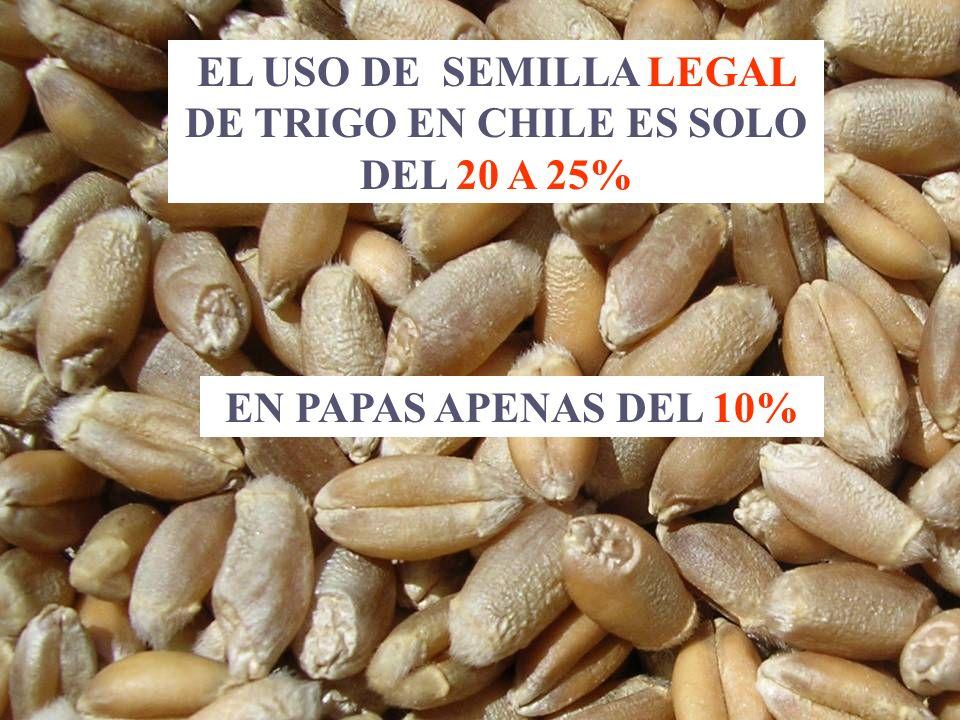 EL USO DE SEMILLA LEGAL DE TRIGO EN CHILE ES SOLO DEL 20 A 25% EN PAPAS APENAS DEL 10%