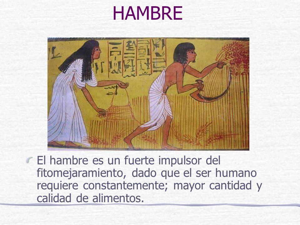 HAMBRE El hambre es un fuerte impulsor del fitomejaramiento, dado que el ser humano requiere constantemente; mayor cantidad y calidad de alimentos.