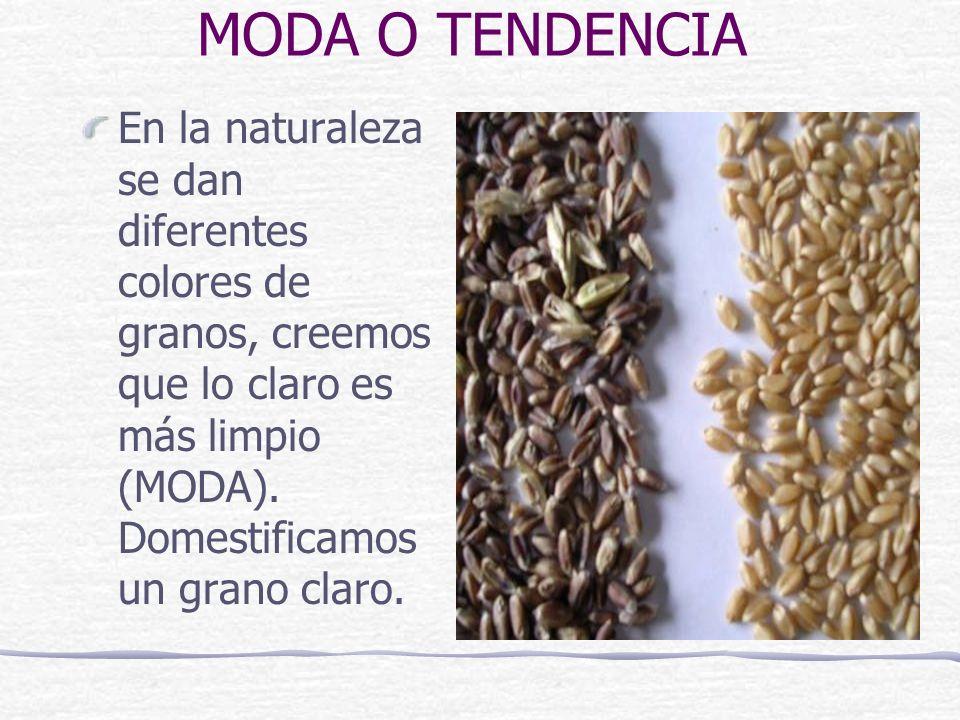 MODA O TENDENCIA En la naturaleza se dan diferentes colores de granos, creemos que lo claro es más limpio (MODA). Domestificamos un grano claro.
