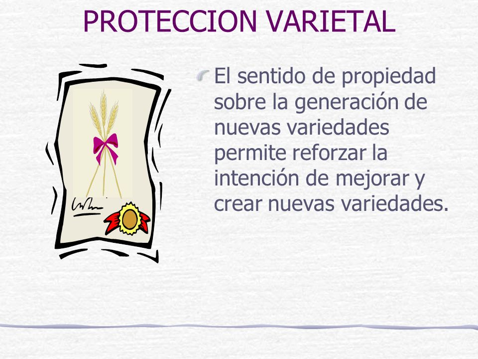 PROTECCION VARIETAL El sentido de propiedad sobre la generación de nuevas variedades permite reforzar la intención de mejorar y crear nuevas variedades.