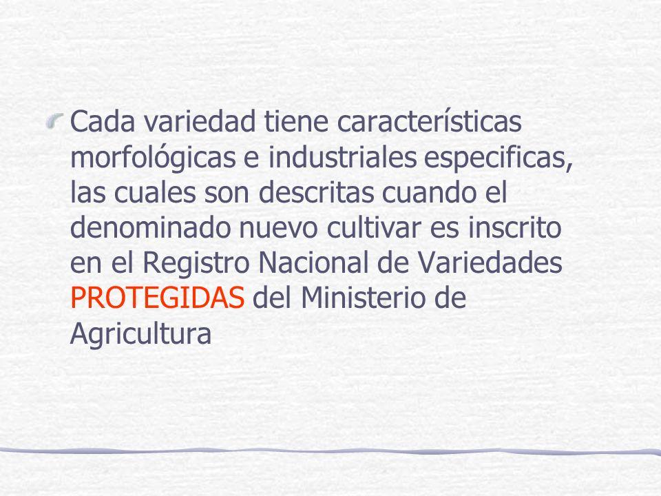 Cada variedad tiene características morfológicas e industriales especificas, las cuales son descritas cuando el denominado nuevo cultivar es inscrito en el Registro Nacional de Variedades PROTEGIDAS del Ministerio de Agricultura