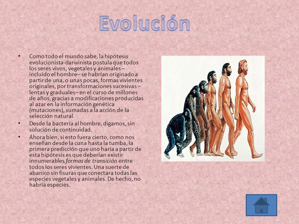 Como todo el mundo sabe, la hipótesis evolucionista-darwinista postula que todos los seres vivos, vegetales y animales – incluido el hombre– se habría