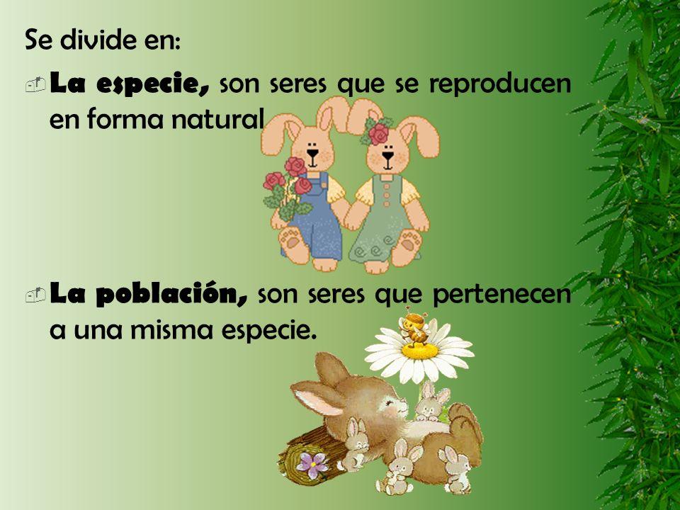 Se divide en: La especie, son seres que se reproducen en forma natural. La población, son seres que pertenecen a una misma especie.