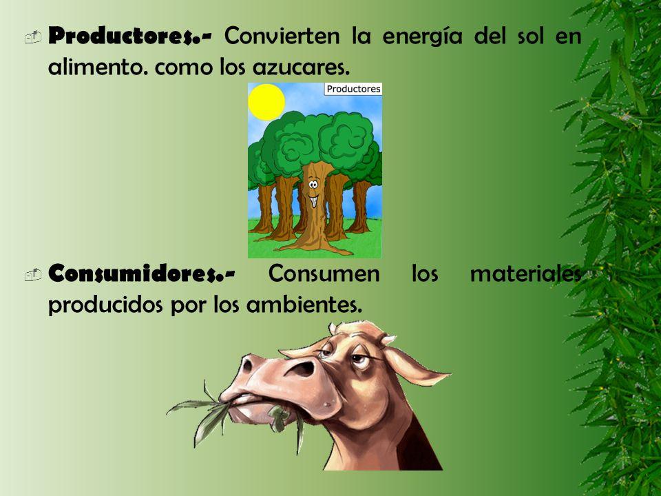 Productores.- Convierten la energía del sol en alimento. como los azucares. Consumidores.- Consumen los materiales producidos por los ambientes.