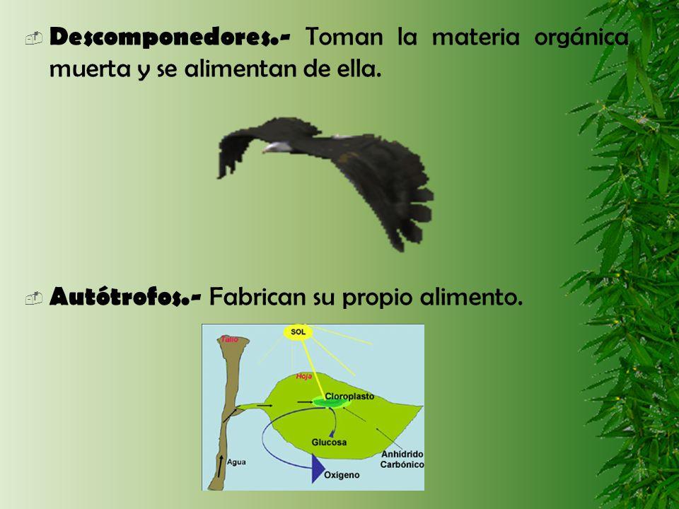 Heterótrofos.- Deben alimentarse con las sustancias orgánicas fabricadas por otros organismos.
