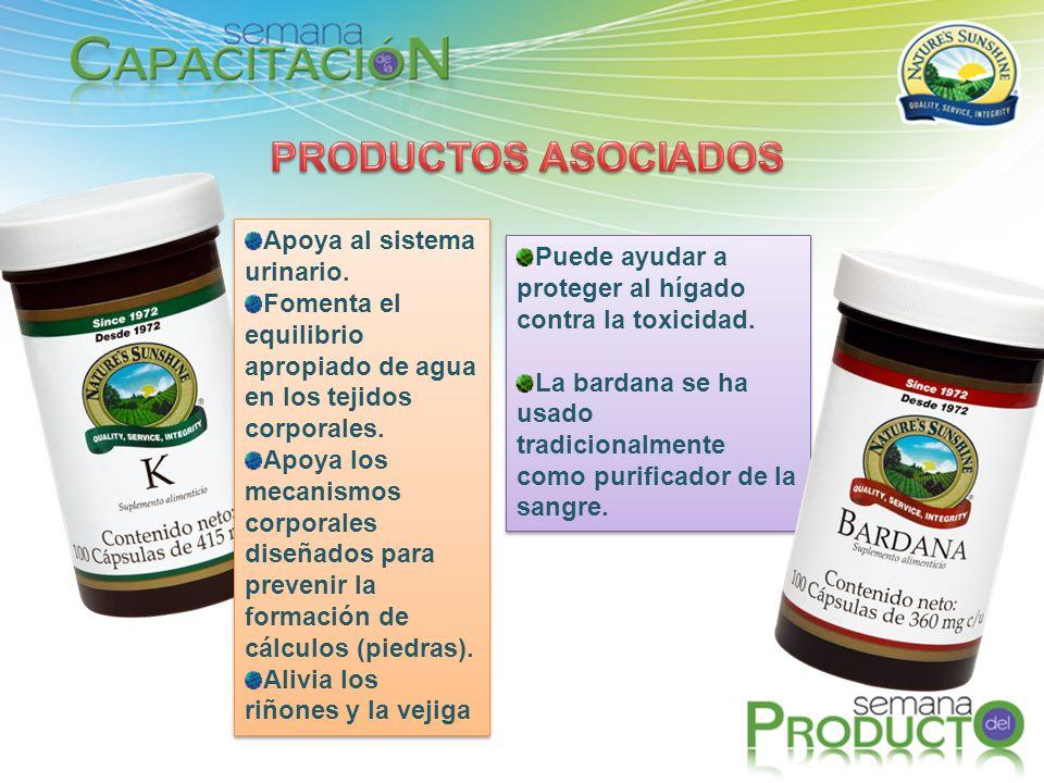 Puede ayudar a proteger al hígado contra la toxicidad. La bardana se ha usado tradicionalmente como purificador de la sangre. Puede ayudar a proteger