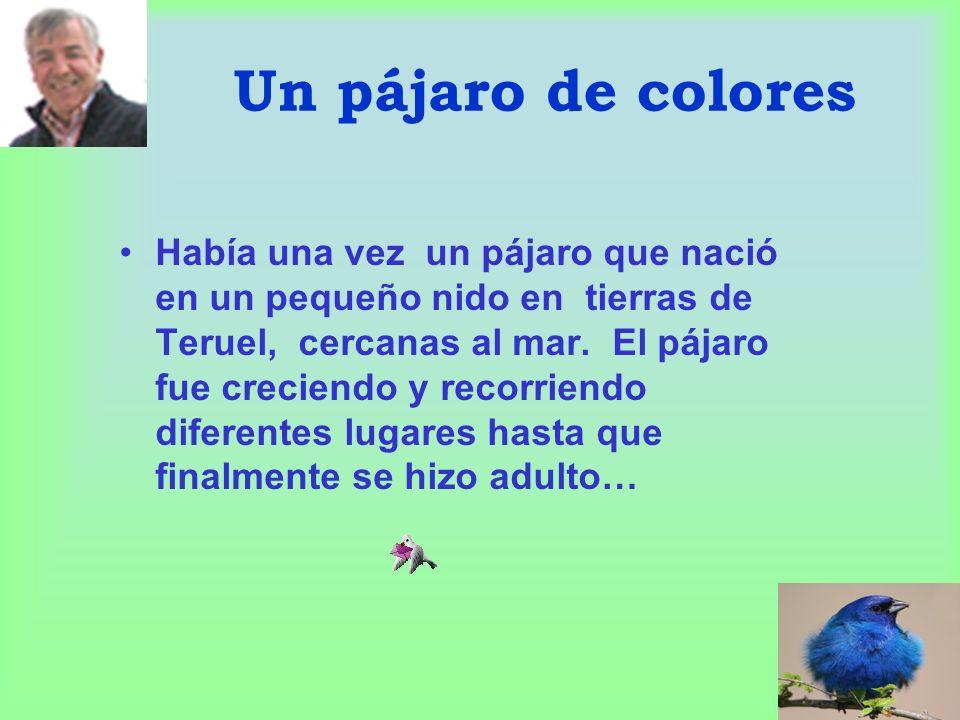 Un pájaro de colores Había una vez un pájaro que nació en un pequeño nido en tierras de Teruel, cercanas al mar.