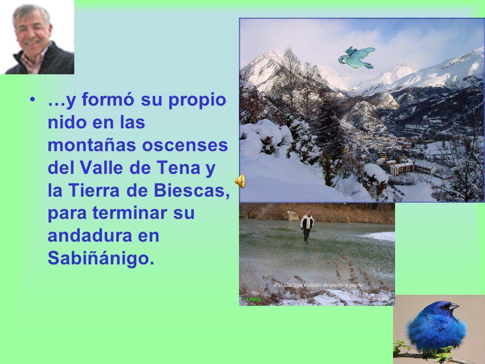 …y formó su propio nido en las montañas oscenses del Valle de Tena y la Tierra de Biescas, para terminar su andadura en Sabiñánigo.