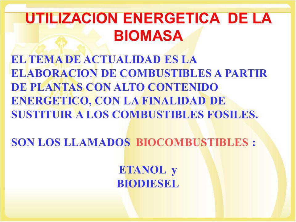 UTILIZACION ENERGETICA DE LA BIOMASA EL TEMA DE ACTUALIDAD ES LA ELABORACION DE COMBUSTIBLES A PARTIR DE PLANTAS CON ALTO CONTENIDO ENERGETICO, CON LA