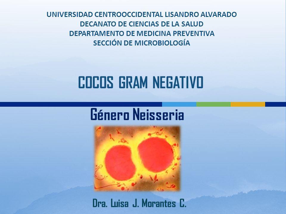 UNIVERSIDAD CENTROOCCIDENTAL LISANDRO ALVARADO DECANATO DE CIENCIAS DE LA SALUD DEPARTAMENTO DE MEDICINA PREVENTIVA SECCIÓN DE MICROBIOLOGÍA COCOS GRAM NEGATIVO Género Neisseria Dra.