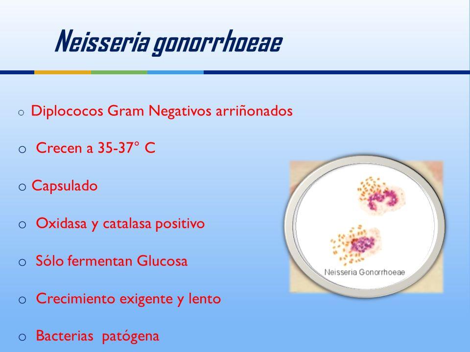 Neisseria gonorrhoeae o Diplococos Gram Negativos arriñonados o Crecen a 35-37° C o Capsulado o Oxidasa y catalasa positivo o Sólo fermentan Glucosa o Crecimiento exigente y lento o Bacterias patógena