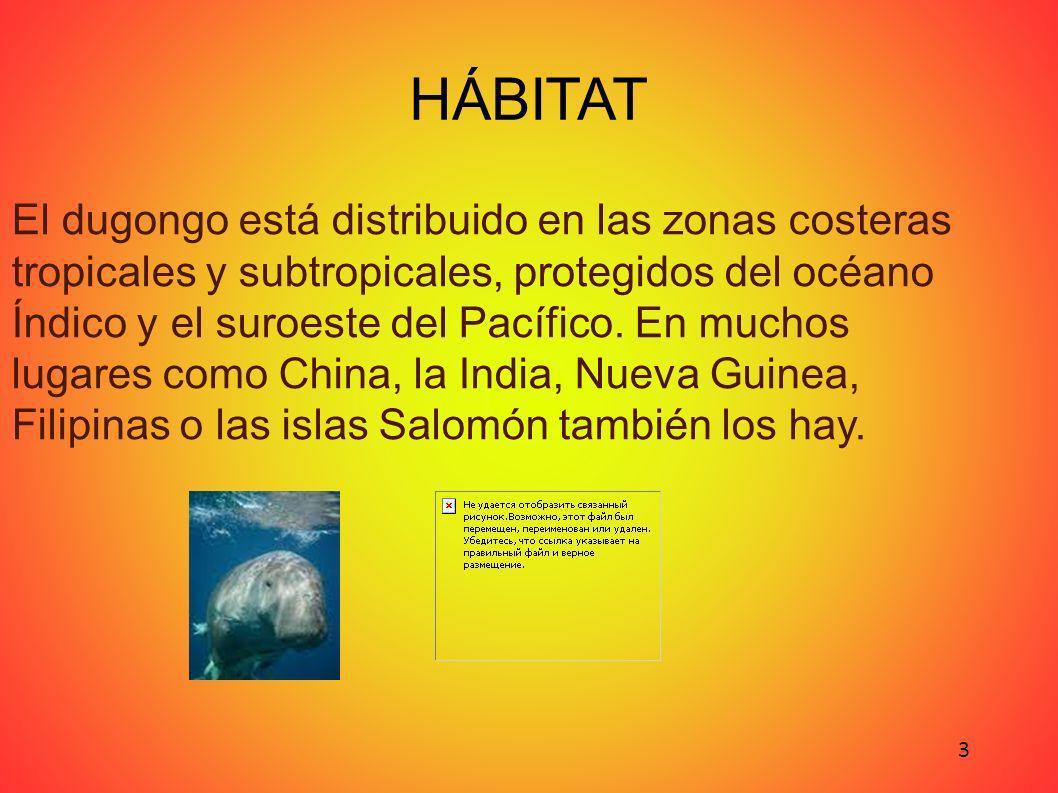 HÁBITAT El dugongo está distribuido en las zonas costeras tropicales y subtropicales, protegidos del océano Índico y el suroeste del Pacífico.